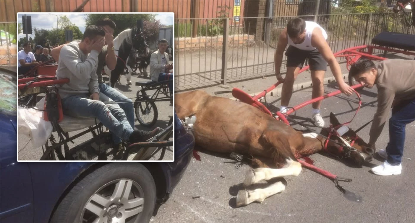 Outrage as horse left for dead after hit by car