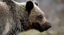 Wall Street's brightest young analysts are still bullish on markets — despite being surrounded by bears