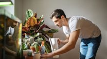 Adiós a un mito: las plantas de interior no purifican el aire