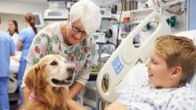 Pets Help in Hospitals, But Safety May Be Lacking