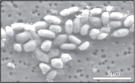 NASA reveals arsenic-bred organisms, search for life gets broader parameters