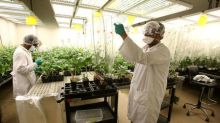 Seed firms scramble to stop a 'cancer' in Canada's cash crop