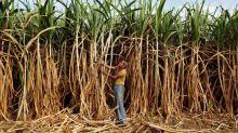 India's Oct-Nov sugar output doubles to 4.29 million tonnes, trade body says
