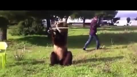 Man Plays With World's Smartest Bear