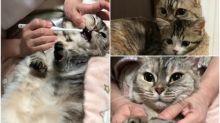 【有片】超乖!日本喵刷牙欲拒還迎好可愛