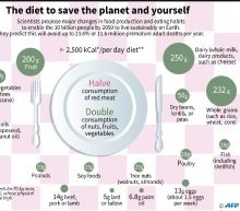 Lentils with a side of rice: the save-the-world diet?