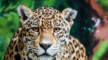 3 animales sagrados de México en peligro de extinción