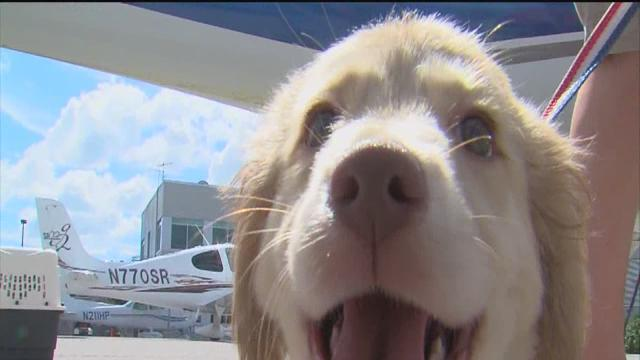 Pilots N Paws brings rescue dogs to Tampa