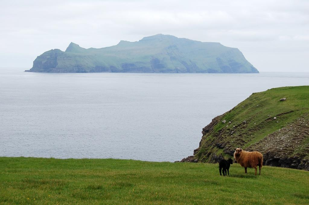 The Faroe Islands' economy is flourishing and GDP per capita exceeds that of Denmark (AFP Photo/Pierre-Henry DESHAYES)