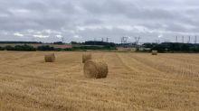 Sécheresse, pluies, compétition mondiale : les producteurs de blé français vivent la pire moisson depuis 16 ans