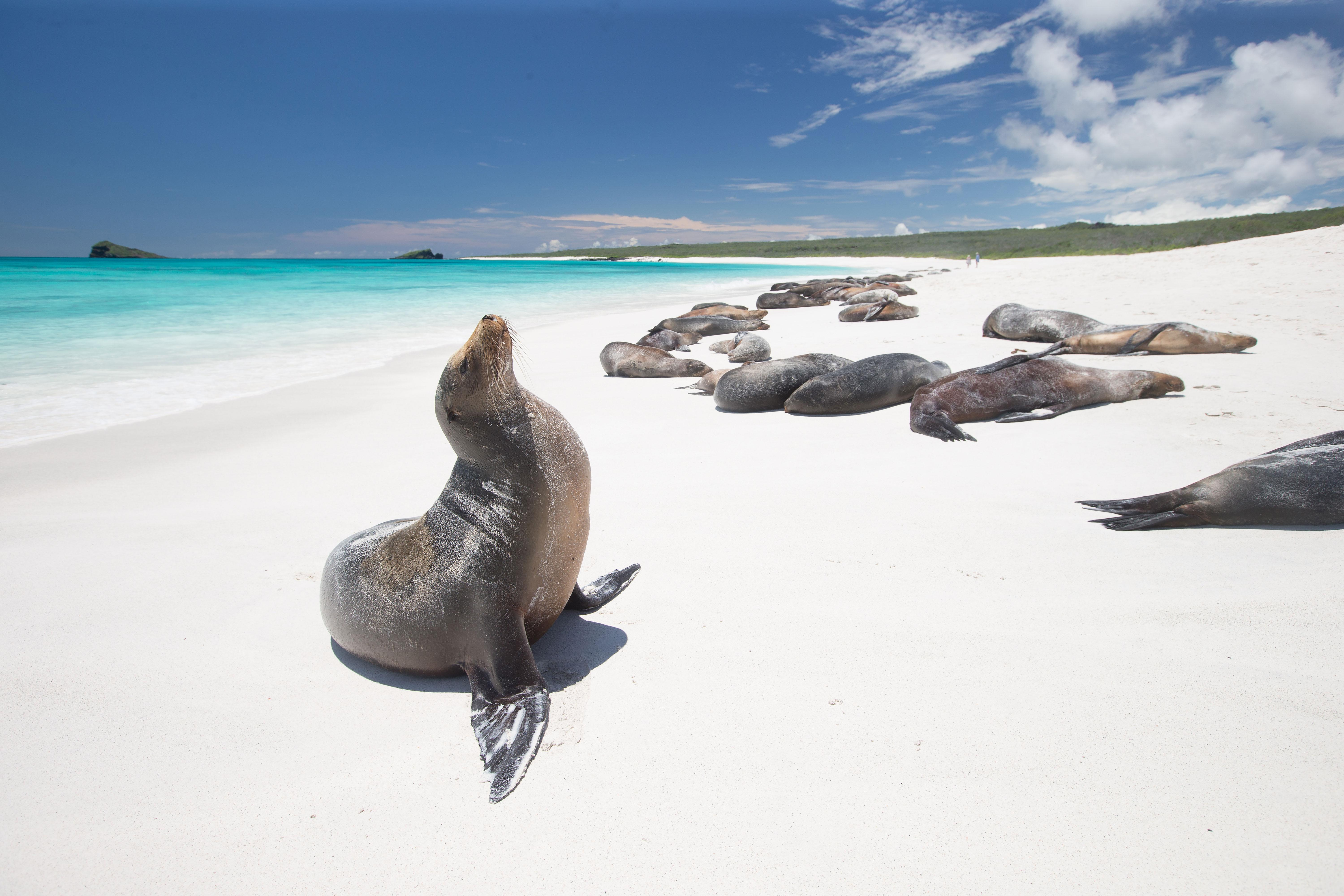 """<p>Luxury goes exploring as the Galapagos welcomes the first true luxury options ever to grace the islands where Darwin realized his theory of evolution. <a href=""""http://www.pikaialodgegalapagos.com"""" rel=""""nofollow noopener"""" target=""""_blank"""" data-ylk=""""slk:Pikaia Lodge"""" class=""""link rapid-noclick-resp""""><strong>Pikaia Lodge</strong></a> promises African-style luxury with haute cuisine, stunning accommodations and daily """"game"""" experiences by land or by sea on one of their private luxury yachts. Guests can choose to be more active by hiking volcanoes and mountain biking or more explore passively by observing wildlife from the comfort of a Zodiac. Meanwhile, for traditionalists, <a href=""""http://www.silversea.com"""" rel=""""nofollow noopener"""" target=""""_blank"""" data-ylk=""""slk:Silversea"""" class=""""link rapid-noclick-resp""""><strong>Silversea</strong></a> opens up a new era in luxury cruising along these heavily regulated islands, with its new expedition ship that fuses the creature comforts of Silversea Cruises with the academic insight and sense of adventure of a classic expedition ship. </p>"""