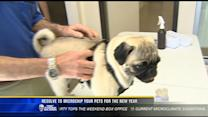 Resolve to microchip your pets for the new year