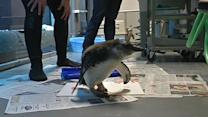 Academy hatches penguin in Golden Gate Park