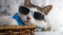Pasarela de moda es interrumpida ¡por un gato! (video)