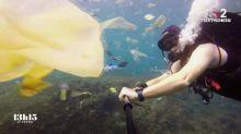 """""""Dans l'assiette du poisson en Méditerranée, il y a moitié de plastique et moitié de zooplancton"""", selon un biologiste"""