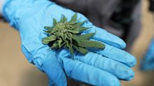 'We call the bottom on Canadian cannabis stocks': Cantor Fitzgerald