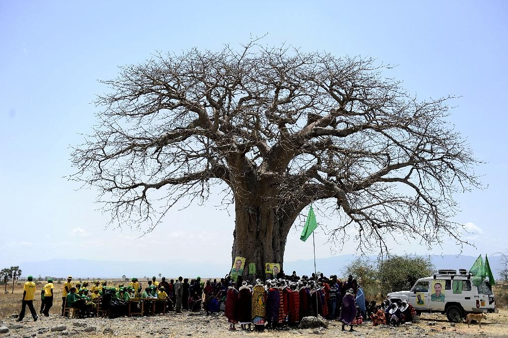The iconic tree can live to be 3,000 years old and one in Zimbabwe is so large that up to 40 people can shelter inside its trunk