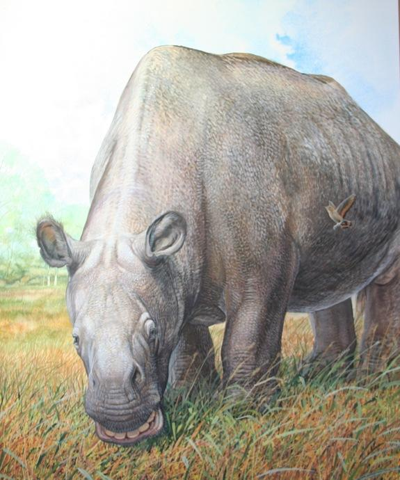 "The extinct animal Toxodon had a rhinolike body and a ""hippo head."""