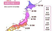 2019日本櫻花前線預測  計畫賞櫻必看