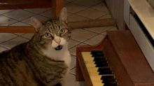 Cat plays piano to tell owner he's hungry