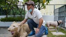 Cambodia PM weighs in to get pet lion returned to owner