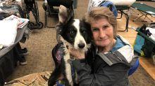 Waldbrände in Kalifornien: Tausende Haustiere suchen ihre Herrchen