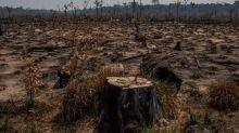 Governo vai pedir mais recursos ao Congresso para combater devastação na Amazônia