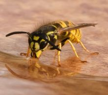 Apparently we're all supposed to be nice to wasps now