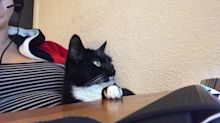 Cat Refuses to Take Paw Off Desk