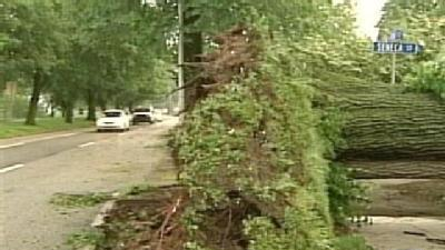 Storm Destroys Huge, Old Elm Along Harrisburg's Front Street