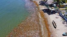 """Un """"tsunami"""" de toneladas de basura invade las playas de Honduras"""