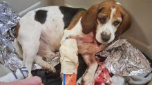 Trucker saves dogs thrown from vehicle on New York highway