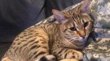 Katze verursacht 25.000 Euro Schaden in neuem Zuhause