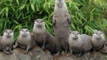 Wie eine Gruppe Otter in einen Heiratsantrag hinein platzte