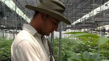Colombia's Government Bets on Cannabis to Help Rehabilitate Struggling Communities -- SECFilings.com