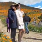 Poppy super bloom attracts hordes of visitors