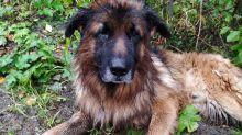 Enterrée vivante, une chienne parvient à s'échapper de sa tombe pour être secourue