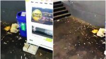 【有片】豊洲市場自動販賣機 非法吸煙大量煙頭