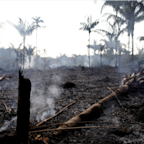 Striking photos show the devastation wreaked by record-breaking fires in the Amazon rainforest