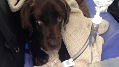 Dog survives 27 days trapped in well