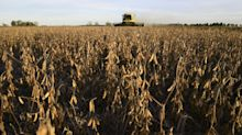 Argentina Seizes Top Soy Exporter in New 'Statist Vision'