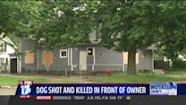 Great Dane Shot And Killed In Front Of Owner