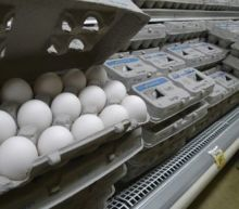 Dead Carcasses and Rodents Found at Farm Behind Massive Salmonella Egg Recall