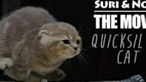 Quicksilver Cats Suri & Noel Present Their Dashing First Movie