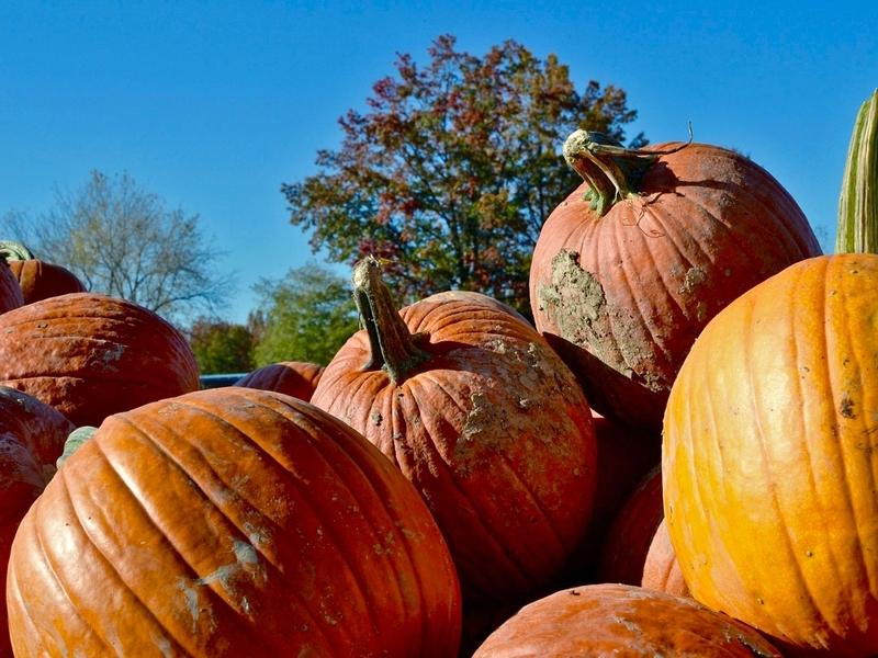 Escape the house and pick out a pumpkin this fall while your family enjoys the fun Mooresville-area pumpkin patches have to offer.