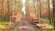 Why Resolute Forest Products Stock Just Dropped 12.5%