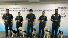 Auxiliary police officers of a different breed ready to sniff out explosives