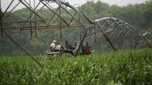 Florida fruit growers sour over NAFTA