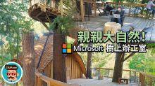 親親大自然!Microsoft 建造樹上辦公室