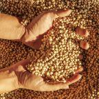 China pauses purchase of U.S. farm goods like soybeans, pork
